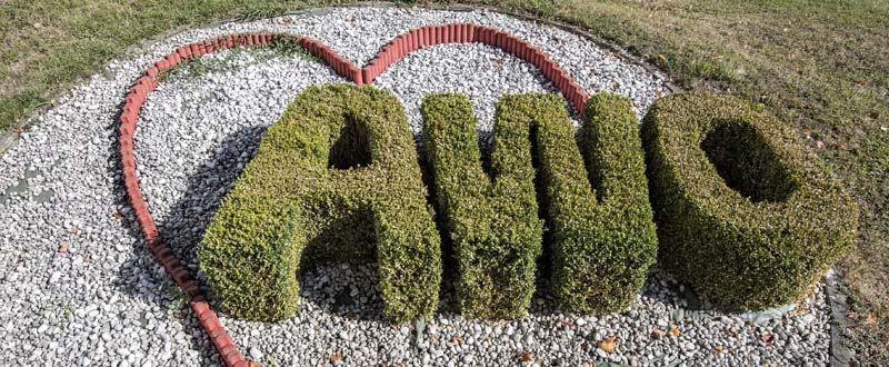 Dieses Bild zeigt eine Hecke die so geschnitten ist, dass sie die Buchstaben AWO formt